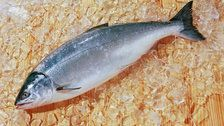Experts Weigh In On Salmon Sperm, A Buzzy New Beauty Ingredient