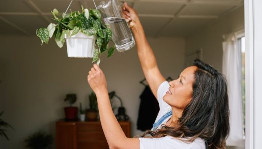 5 Signs Of An Overwatered Plant + How To Save It Before It's Too Late