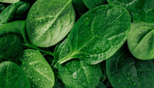 This Is How Experts Store Spinach So It Doesn't Spoil So Quickly
