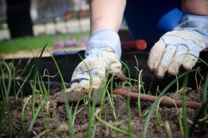 Gardening for Exercise: Good for You, Good for the Planet