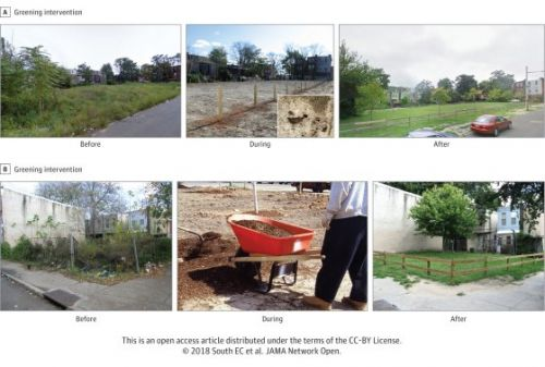 Turning Vacant Lots Into Green Spaces Can Improve Mental Health. Here's How