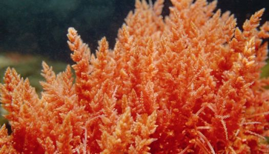 What Is Sea Moss & Is It A Superfood? Registered Dietitians Dive In
