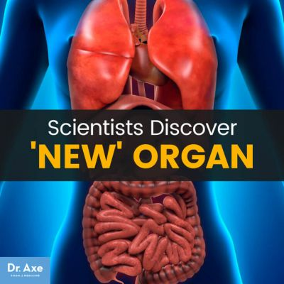 Surprise! Scientists Discover New Organ in the Human Body