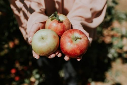 Apple Fruit Extract Skin Benefit: A Wild Ally in Skin Care