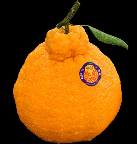 Here's Where To Buy The Sumo Citrus Oranges People Cannot Stop Obsessing Over