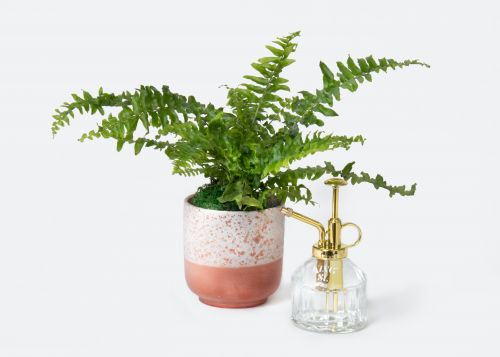 UrbanStems' Valentine's Day 2021 Flowers & Plants Include A Love Fern & So Many Succulents