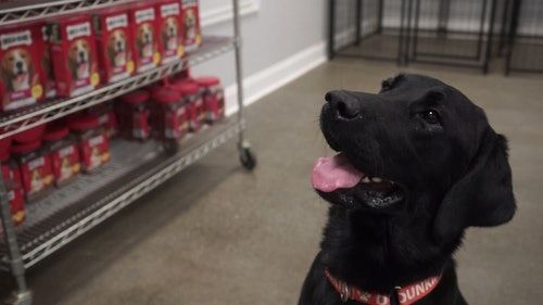 Dunkin's Dogs For Joy Program Includes The Cutest Canine As Its Chief Joy Officer