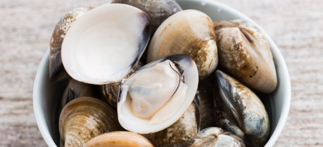Bivalve Pros & Cons: Should You Eat Mollusk?